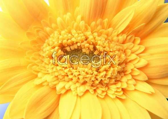Flowers close-up 181