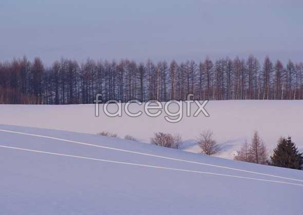 Ice 461