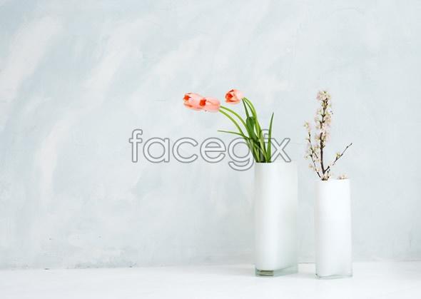 Indoor flower 77