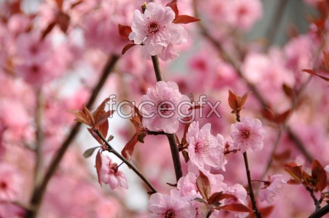 Beautiful HD Sakura pictures