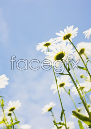 Flowers and pictures of 2,135