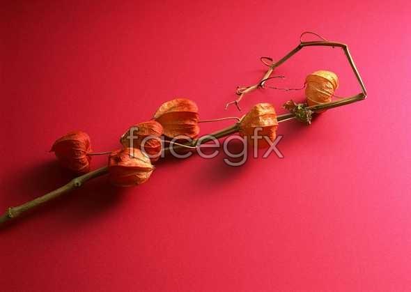 Flowers close-up 1106