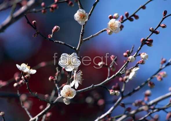 Flowers close-up 1580