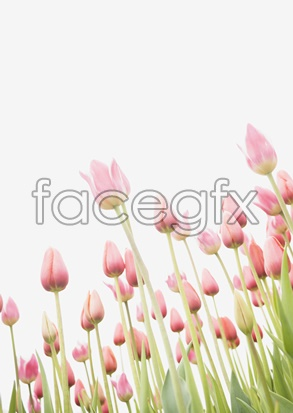 Flowers close-up 2045