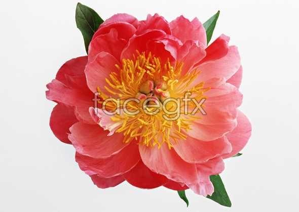 Flowers close-up 484