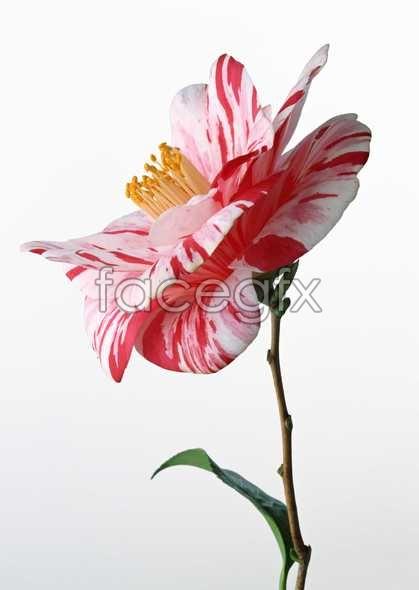 Flowers close-up 577