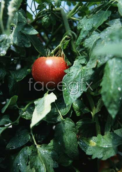 Fresh fruits and vegetables, 61