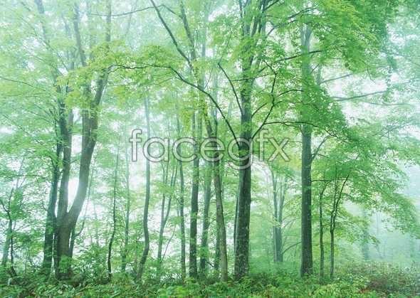 Jungle beauty of 140