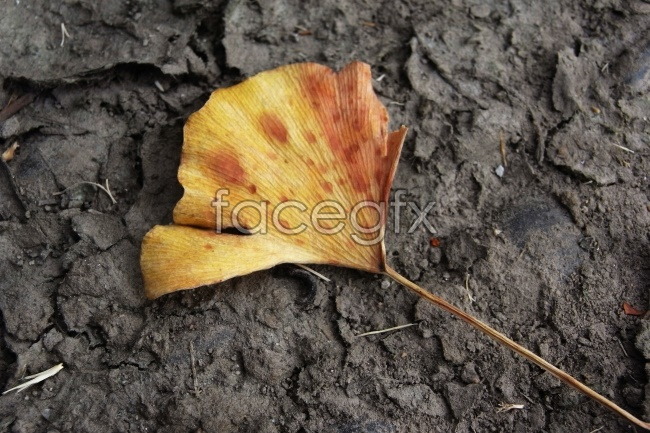 Non-mainstream yellow leaf pictures
