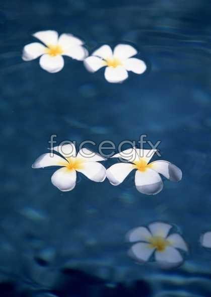 Flowers close-up 1556