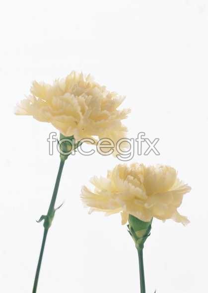 Flowers close-up 1700