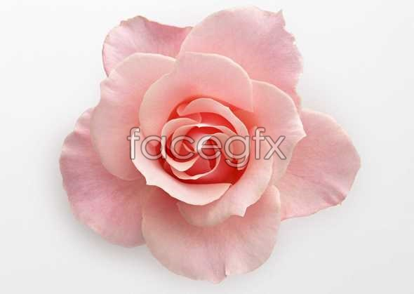 Flowers close-up 395