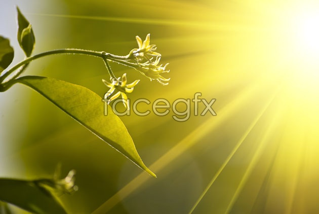 HD light green leaf picture