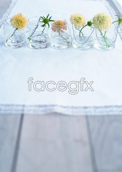 Indoor flower 59