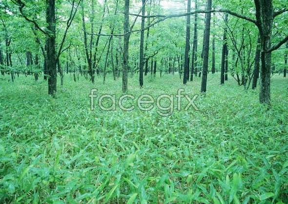 Jungle beauty of 104