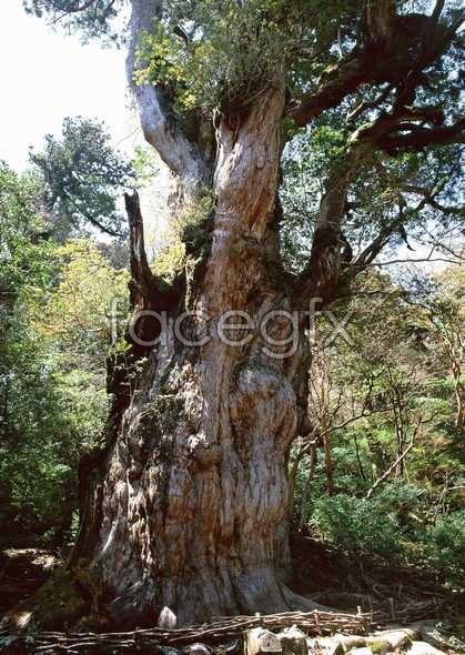 Jungle beauty of 339