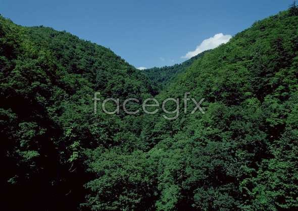 Jungle beauty of 485