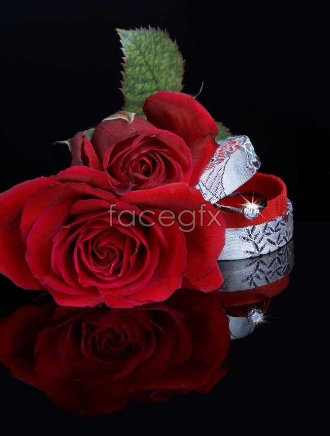 Small, dark red roses picture