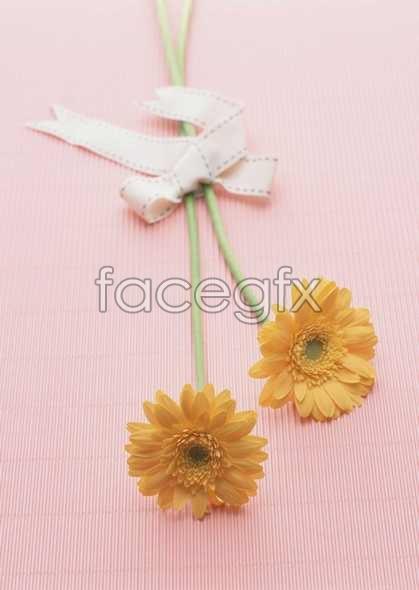 Thousand flower 414