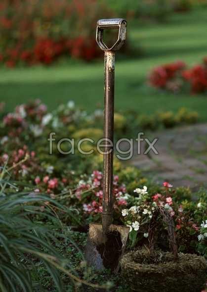 Flowers close-up 1236