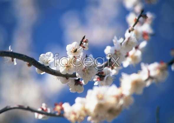 Flowers close-up 1582