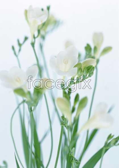 Flowers close-up 1814