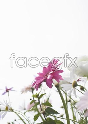 Flowers close-up 2,055