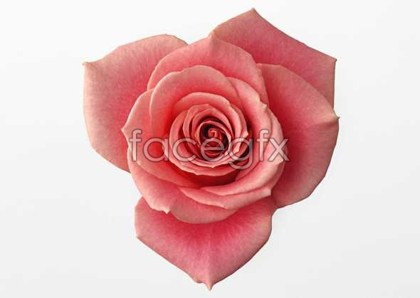 Flowers close-up 393