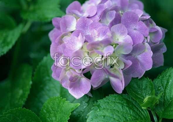 Flowers close-up 620