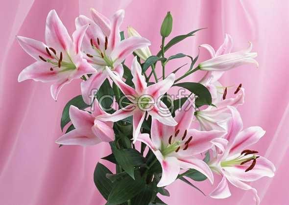 Flowers close-up 905