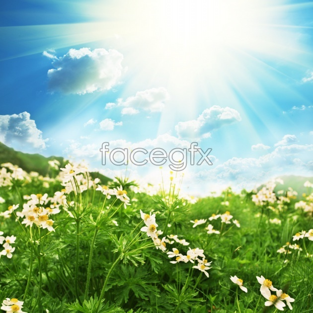 HD flower landscape picture