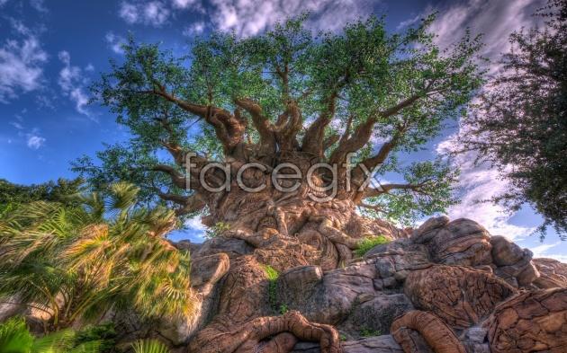 HD landscape backgrounds pictures