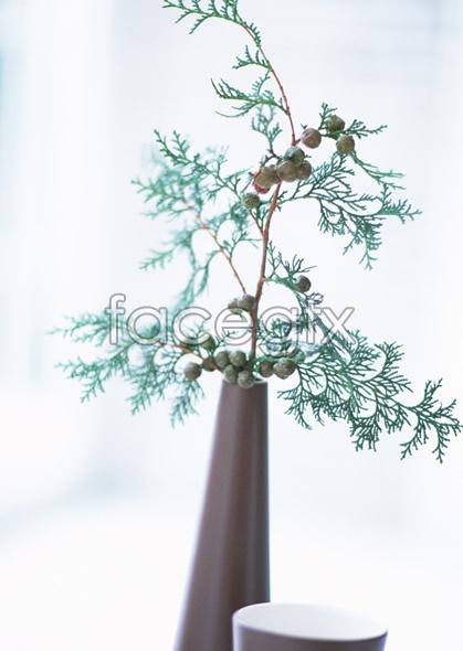 Indoor flower 156