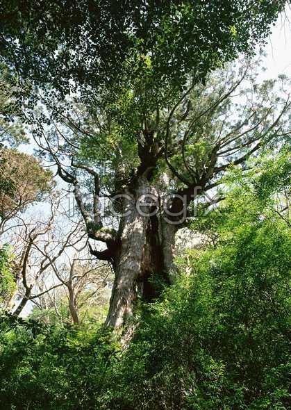 Jungle beauty of 348