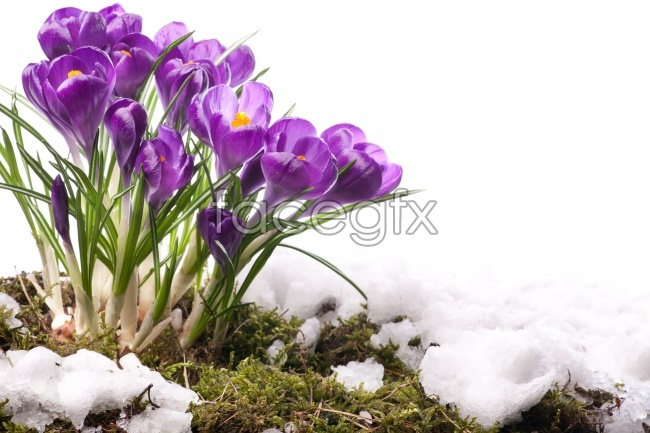 Purple Orchid HD pictures