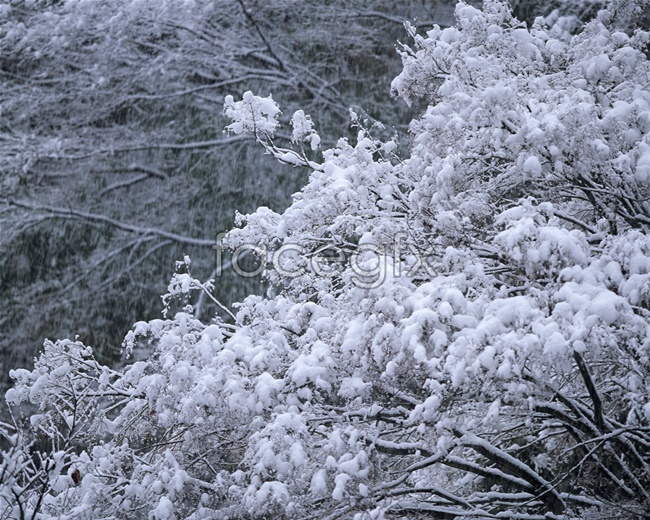 Snow forest high definition pictures