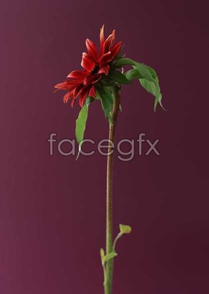 Flowers close-up 1381
