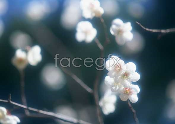 Flowers close-up 1578