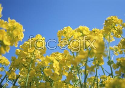 Flowers close-up 2,093