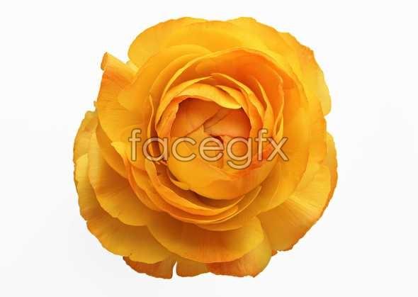 Flowers close-up 411