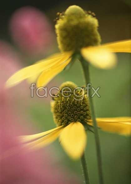 Flowers close-up 641
