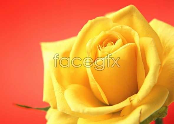 Flowers close-up 973