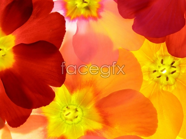 Gorgeous flowers background pictures