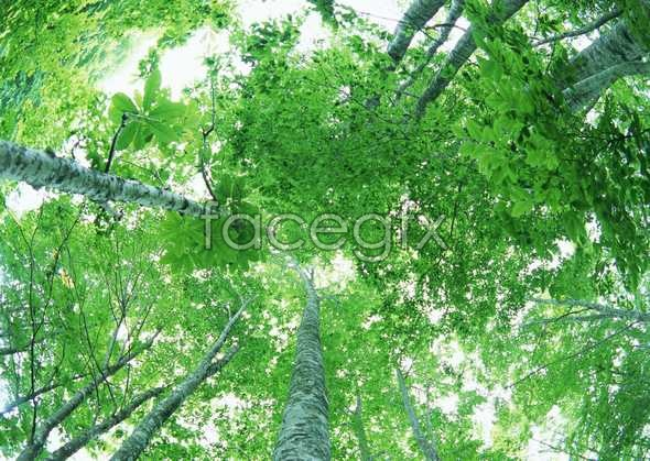Jungle beauty of 48
