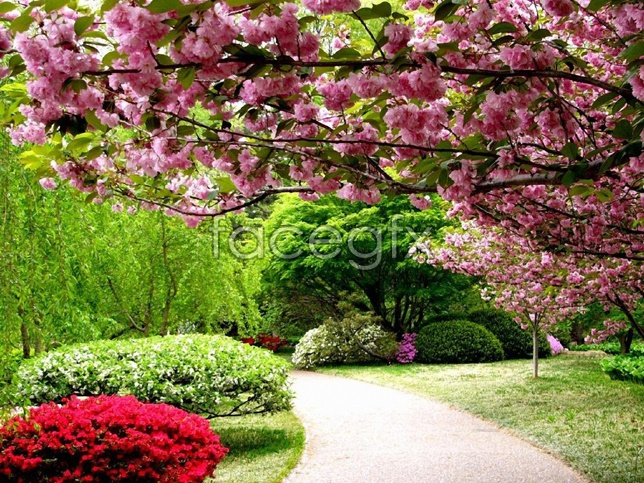 Spring blossom pictures