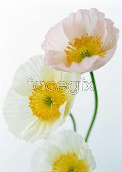 Flowers close-up 1418