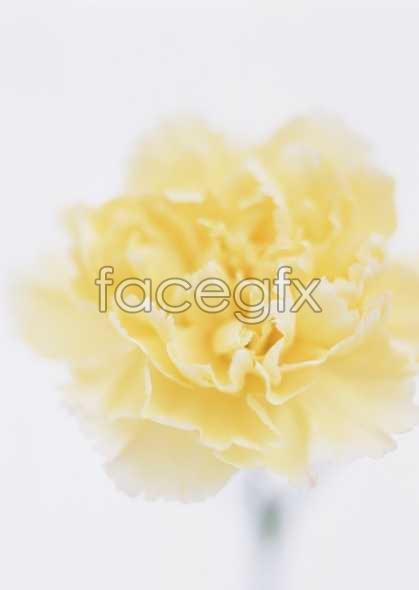 Flowers close-up 1659