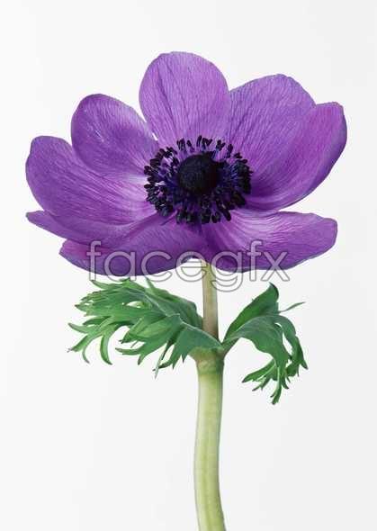 Flowers close-up 548