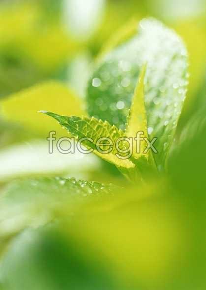 Flowers close-up 789