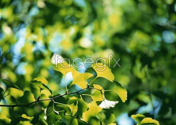 Flowers close-up 853